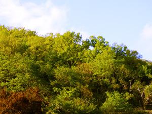 山梨の四季 新緑