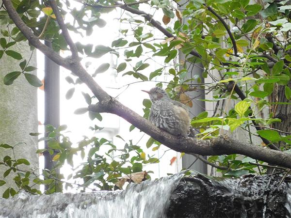 和三郎 水辺で遊ぶ野鳥