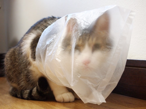 ビニールフェチ猫