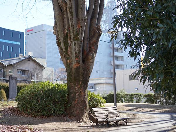丸十パン 近所の公園