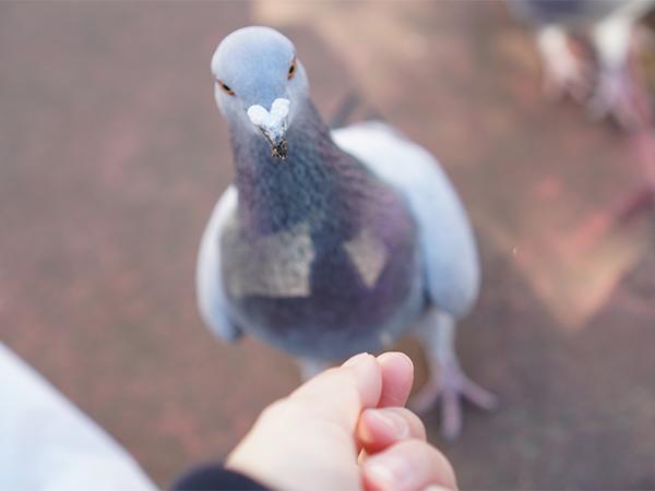 丸十パン 優しくついばむ鳩