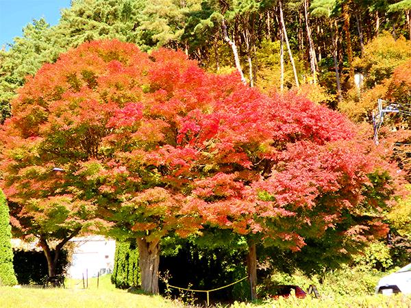 道沿いの見事な紅葉