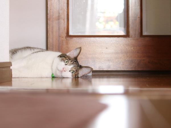 行き倒れの猫
