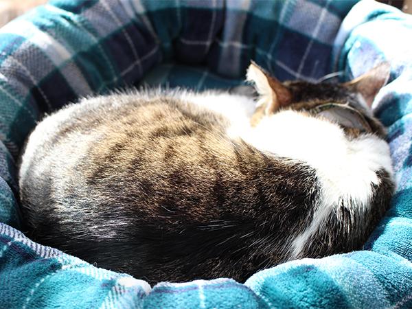 日向ぼっこしながらの昼寝