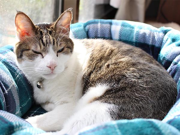 猫ベッドの向きを変えられて起きたCEO