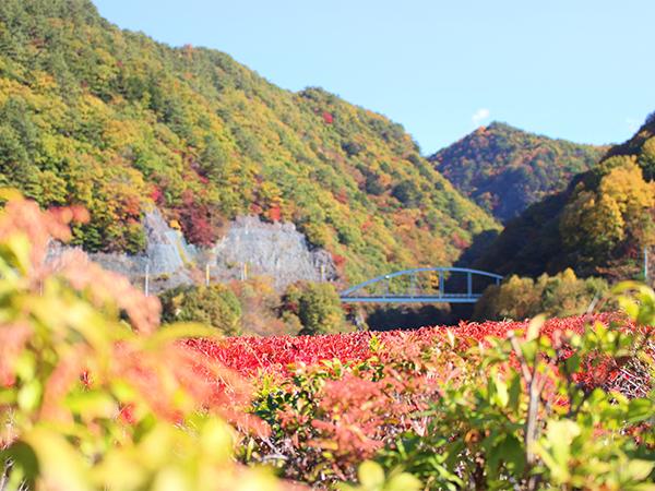 みずがき湖の紅葉